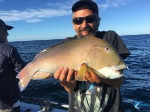 baldchin groper abrolhos islands wa fish species