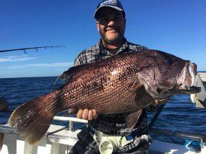 Dhu Fish Abrolhos Islands WA Blue Lightning Fishing charters