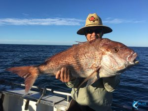 Pink Snapper Abrolhos Islands WA fishing charter