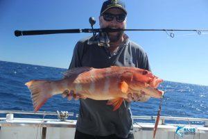 Coral Trout Montebello Islands WA fishing