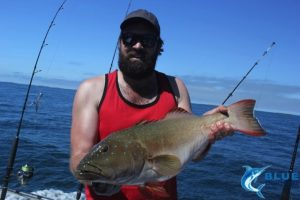 Coral Trout Montebello Islands fishing charter blue lightning