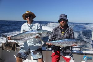 Spanish Mackerel WA Montebello Islands best fishing blue lightning charters