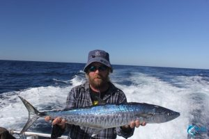 spanish mackerel wa best fishing montebello islands
