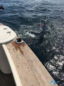 Stripe Marlin Montebello Islands fishing charter WA