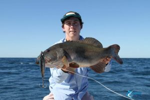 Coral Trout Montebello Islands caught stick bait blue lightning fishing charters