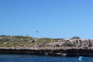 eagles nest montebello Islands eco tours wa blue lightning charters