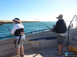 Blue Lightning fishing charters montebello islands new boat global venture