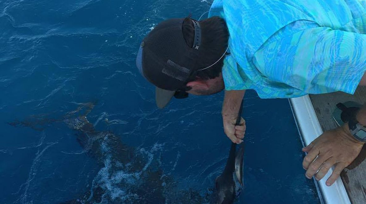 Sailfish Montebello Islands WA billfishing