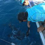 Sailfish Montebello Islands WA billfishing