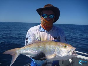 Goldband snapper wa sportsfishing