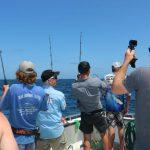 6 way hook up sailfish billfishing montebello islands blue lightning charters