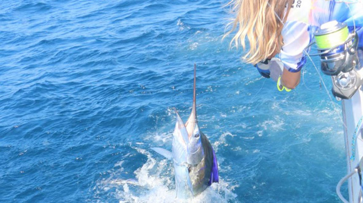 Sailfish montebello islands amazing billfishing