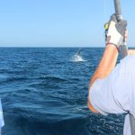 Sailfish spectacle WA record blue lightning montebello islands