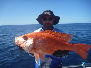 Scarlet Sea Perch Montebello Islands WA karratha fishing charter