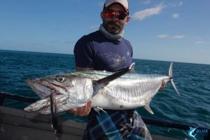Spanish mackerel montebello islands wa fishing blue lightning charters