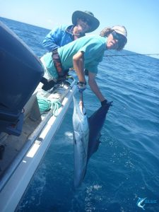 Sailfish Montebello Islands Karratha billfishing blue lightning charters captain chad mills