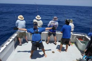 Sailfish 4 way hookup WA gamefishing charter