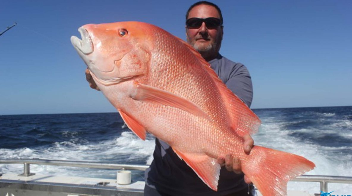 Red Emperor wa best fishing charter