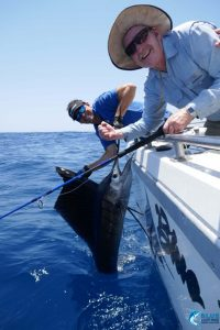 Sailfish gamefishing charter blue lightning charters WA
