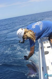 Sailfish montebello islands wa fishing charter