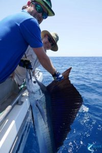 Sailfish WA