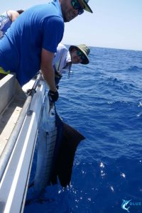 Gamefishing WA Sailfish Blue Lightning