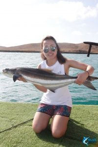 Cobia Montebello Islands