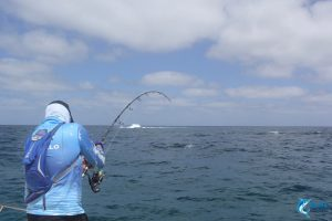 Spanish Mackerel WA fishing charter