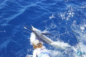 billfish montebello islands
