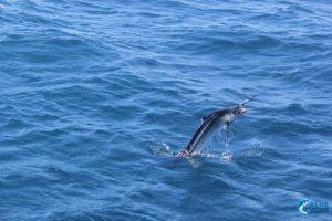 Fishing Montebello islands wa