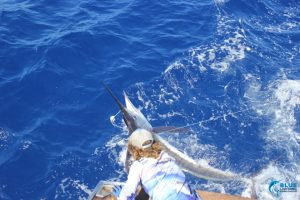 Striped marlin female angler wa fishing charter