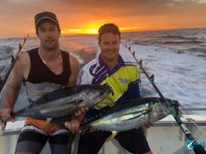 Yellow fin tuna WA Abrolhos islands