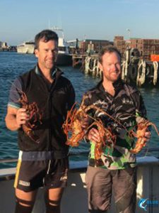 WA crayfish abrolhos islands fishing charter