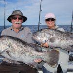 Dhu Fish Western Australia Abrolhos Islands