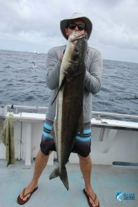 Cobia Abrolhos Islands Wa fishing charter
