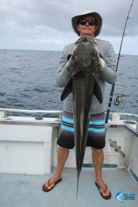 Cobia WA Abrolhos Islands
